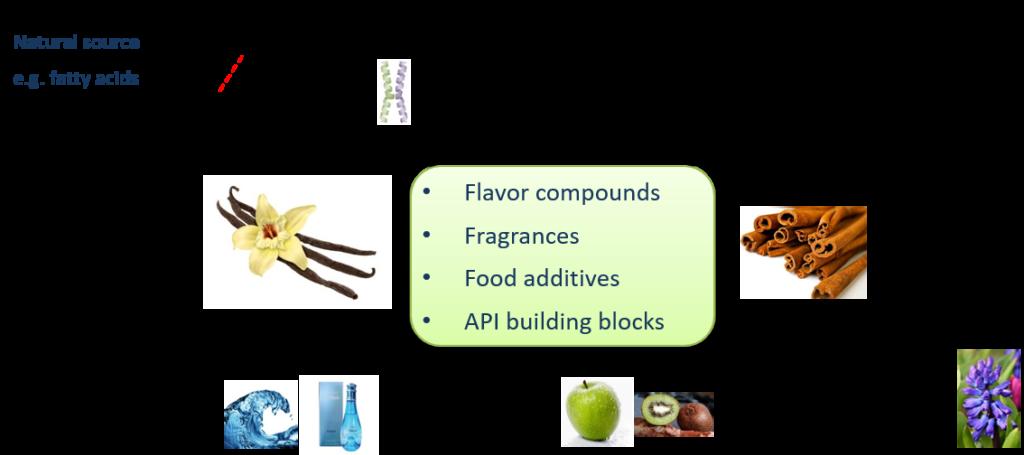 Post-rudrofflab-Biozone-scheme